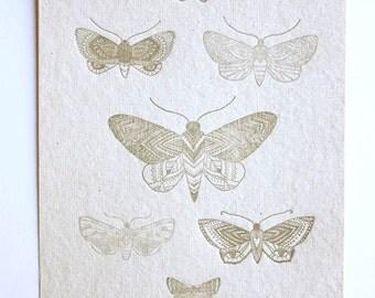 letterpress study of the Luna Moth, hand drawn, tribal, boho, illustration, warm grey, earthy
