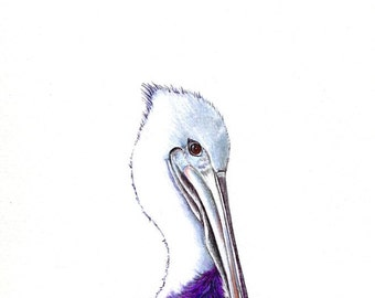"""Purple Pelican art print of an original drawing available 5x7"""" or 8x10"""""""