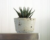 Stan - A Soothing Aloe Plant In One-of-a-Kind Handcrafted Cement Planter
