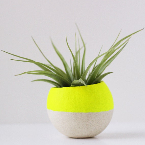 Neon Yellow Air Plant Pot w/ Air Plant