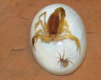 Arizona Scorpion and Spider Paperweight 33-82