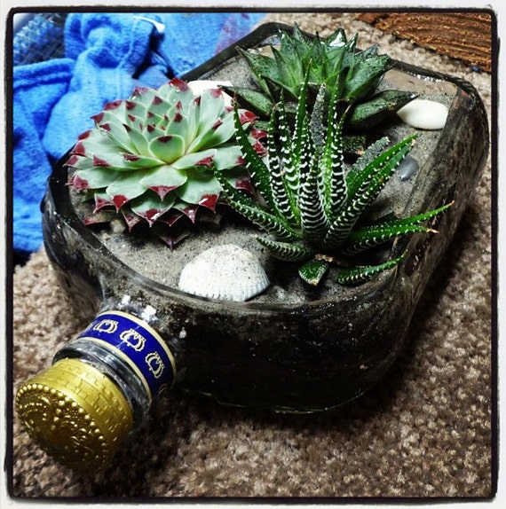 Items similar to Liquor Bottle Garden Kit for Indoor Succulent