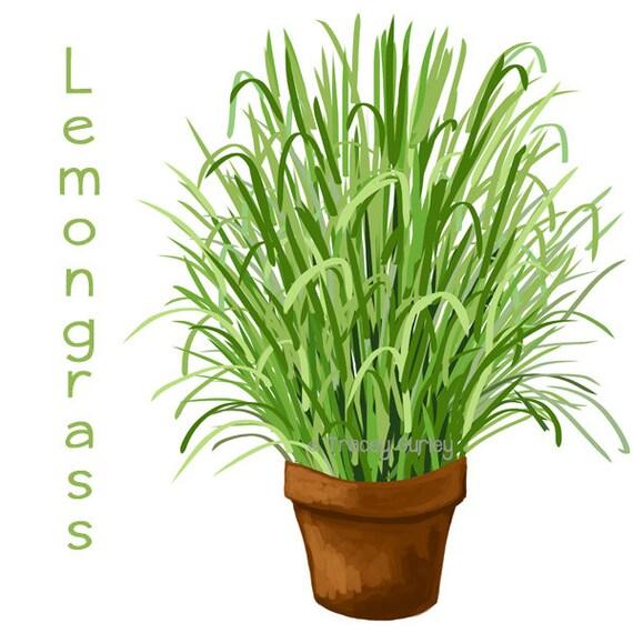 Lemongrass with and without pot Original Art Download 4