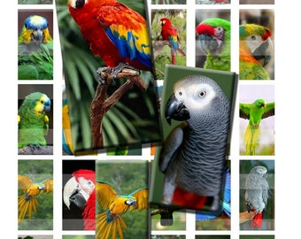 Parrot Tropical Bird Colorful Wild Zoo African Grey Digital Images Collage Sheet 1x2 inch Rectangles Domino Commercial INSTANT Download RD41