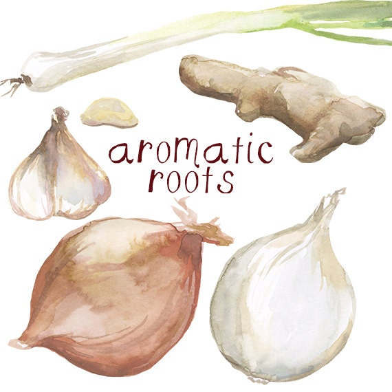 Watercolor Cooking Clip Art Garlic Onion Green Onion Ginger