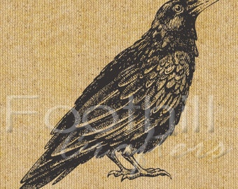INSTANT DOWNLOAD -  Vintage Black Bird Crow Raven Digital Graphic - 8.5x11 - Fabric or Paper Projects - Printable - Image transfer - Birds
