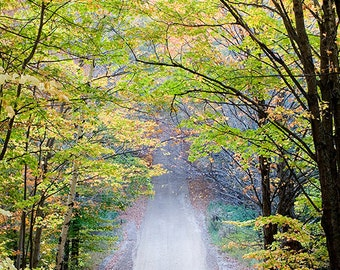 Fall Path Photography Print