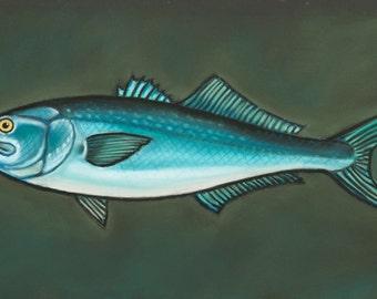 Cape Cod Bluefish - Print of original pastel