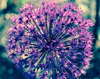 Flower Photograph Macro Flower Photography Purple Allium 5x5 10x10 12x12