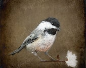 Chickadee Print Download, Bird Photography, Nature Photography, Wildlife Photo,Bird Art, Animal Photo, Earthy, Rustic, Brown, Cottage Photo
