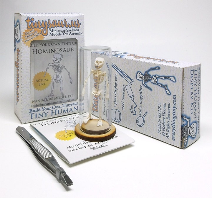 tiny human skeleton model kit with glass display dome and assembly, Skeleton