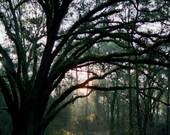 Santos Trail Head - Canop...