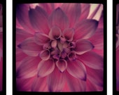 Positively Pink- Floral Photo Wall Art...Three Image Set - OberleighImages