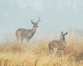 Two Deer, Animal Photography, Wildlife Photo, Texas Gulf Coast Print, Foggy Landscape Photography, Brown and Blue, Soft Colors