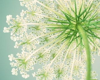 Large Wall Art, Modern Photography, Large Flower Art, Queen Anne's Lace, Teal, Green, Flower Photography Print, Large Art Print