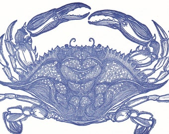 Beautiful Swimmers Blue Crab Card
