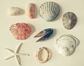 CLEARANCE SALE! Nature Photography, Still Life, Sea Shell Art, Bathroom Wall Art, Rustic, Beach House Decor, Coral and Grey - From the Sea