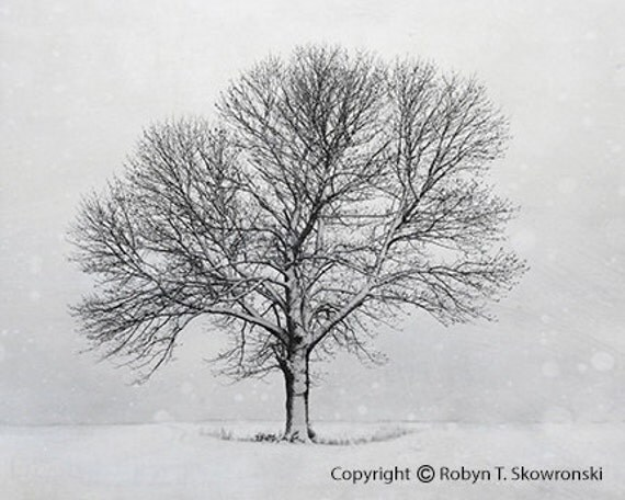 Solitude - Winter Photography - 8x10 Fine Art Photograph