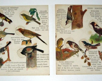 Antique (1910s) Children's Puzzle Educational Game Boards - Birds