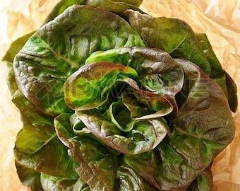 Organic Bronze Mignonette Lettuce Heirloom Vegetable Seeds