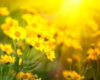 Spray for Wreath, Wreaths, Wreath Protectant, Protect Wreath from Sun, UV Spray, Outdoor Wreaths, Protect Your Wreath, Wreath