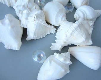Beach Decor XL White Shells - Nautical White Seashells, XL, 12PC