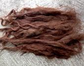 Long Suri Alpaca Locks, 8 Inches, Medium Brown, 1 Ounce, Liberty