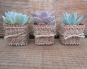 Reserved For Deborah, 25 Rosette Succulent Favors Wrapped In Burlap, Twine, Ship July 18