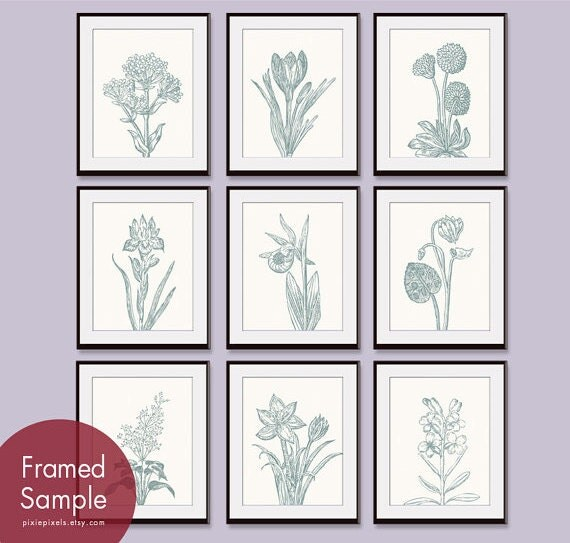 Wild Flower Botanical Prints (Series G) - Set of 9 - Art Prints (Featured in Cream and Rich Silver Sage)