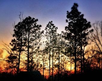 "8"" x 10"" Fine Art Forest Sunset Photographic Print - Metallic Finish"