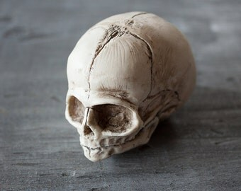 Fetal Skull Solid Resin - A Curious Item - by Devils Chariot