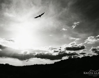 Sunset Vulture Photograph, Landscape Art, Bird Photo, Black And White Home Decor, Buzzard Art, Turkey Vulture
