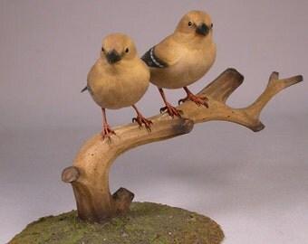 Pair of female-female America Goldfinch