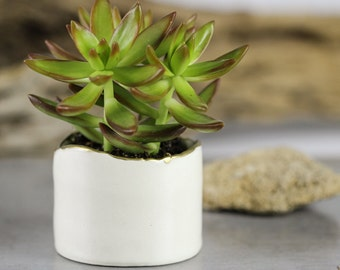 White modern ceramic planter, Succulent planter, Ceramic plant pot, Home decor, Hand decorated gold line, Ceramic Planters