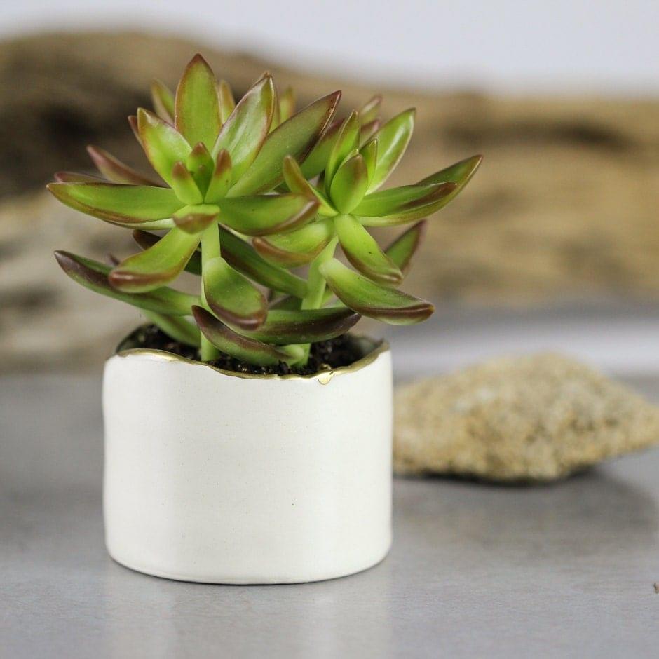 White modern ceramic planter succulent planter ceramic plant Planters for succulents