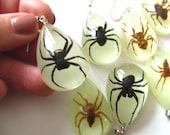 Spider earrings, spider, Glow in the dark, drop earrings, brown or black spider,taxidermi, by NewellsJewels on etsy