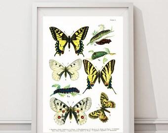 Butterflies rare vintage Wall Art prints