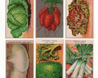 Vegetable Seed Packet Labels 24 antique French botanical prints for garden room or kitchen art (Set A)