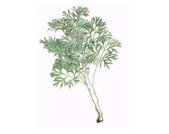 Wormwood seeds (Artemisia Absinthium) Non-GMO, Untreated
