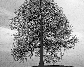 Tree By The James River - Williamsburg VA -Fine Art Black & White Photography by Dave Lynch - Free Shipping  on any additional purchase