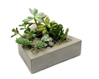 Kite Concrete Planter