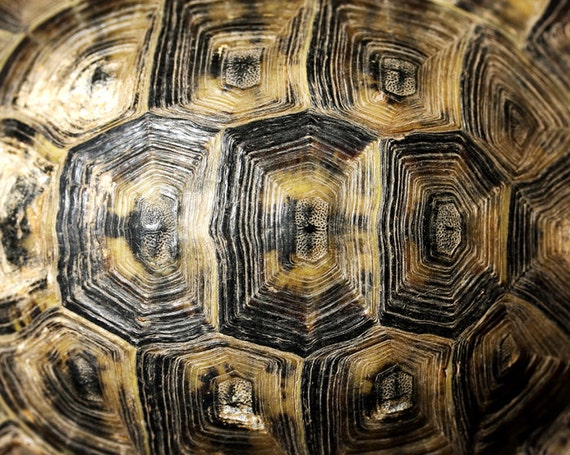 Photo download Nature photography Turtle shell macro surreal