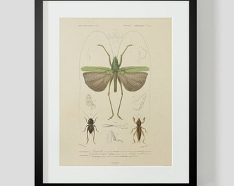 Vintage Insect Entomology Plate 5