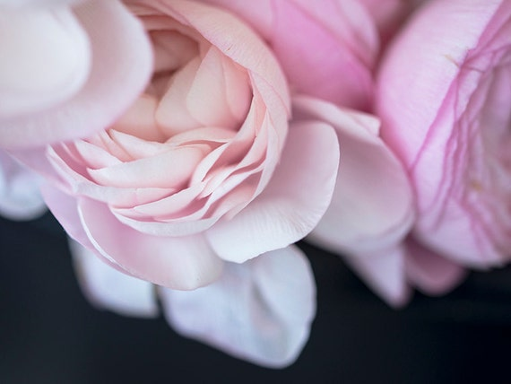 Somewhere In Paris, Fine Art Photography, Nature Photography, Soft Pink, Romance
