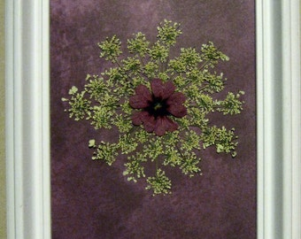 Pressed Flower Picture- Queen Annes Lace No. 235  NEW