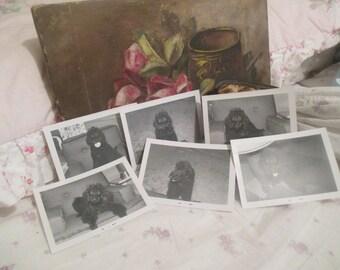 Lot 6 Vintage Photograph Photo Snapshot Pure Bred Black Standard Poodle Dog Puppy