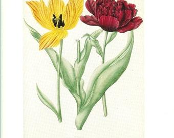 Vintage Botanical Print 1984 Color Art Original Book Plate 261 Beautiful Yellow Red Tulips Flower Illustration Antique Writing Decoration