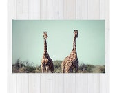 Giraffes Photography Rug.