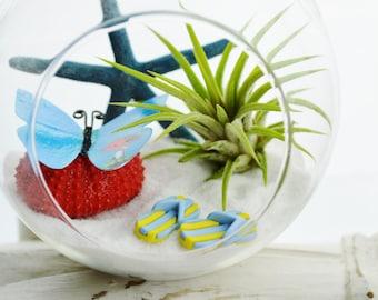 Butterfly Terrarium Kit ~ Glass Terrarium with Air Plant - Beach Decor - Blue Starfish - Flip Flops ~ Mothers Day Gift ~ Birthday Gift
