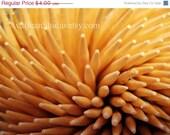 CRAZY SUMMER CLEARANCE Toothpicks - Fine Art Lustre Print
